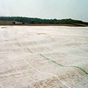 Crop And Plant Protection